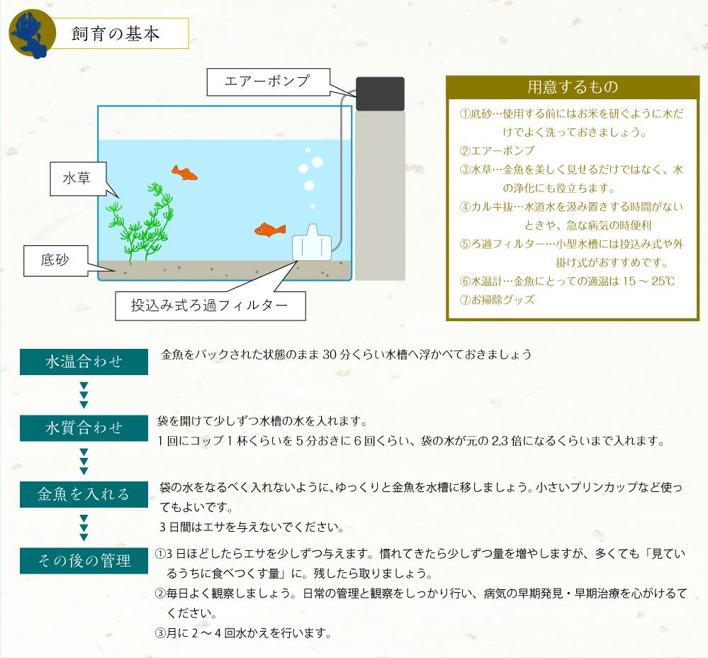 金魚飼育の基本