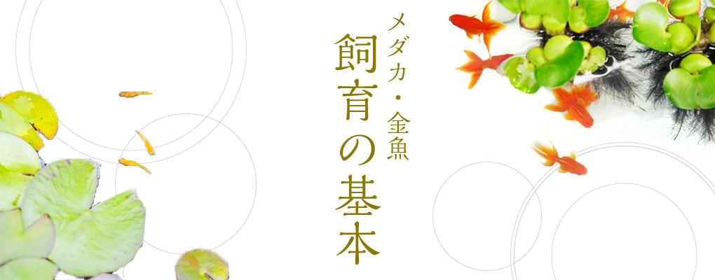 メダカ・金魚飼育