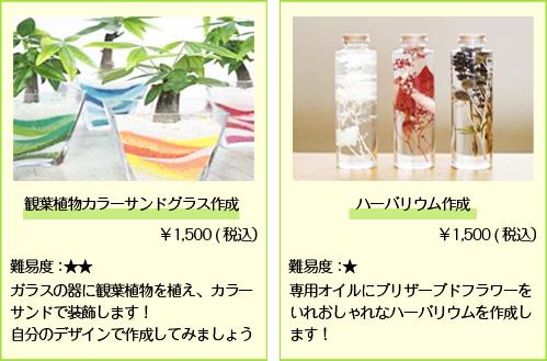 観葉植物カラーサンドグラス_ハーバリウム