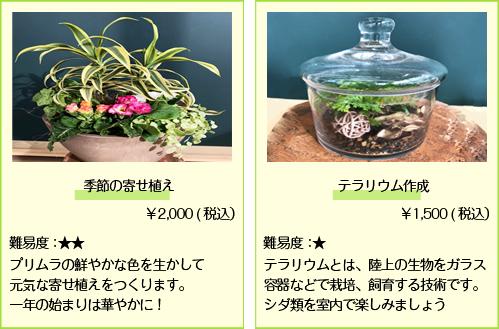 季節の寄せ植え_テラリウム
