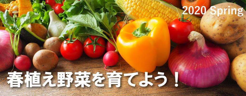 春植えの野菜を育てよう